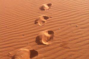 מורה דרך במדבר